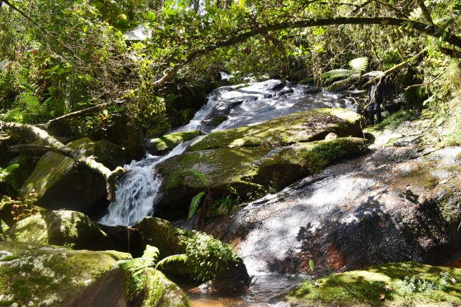 Malagasy Nature Photographs – Maromizaha Reserve Speciale (Day Hike)11/04/15