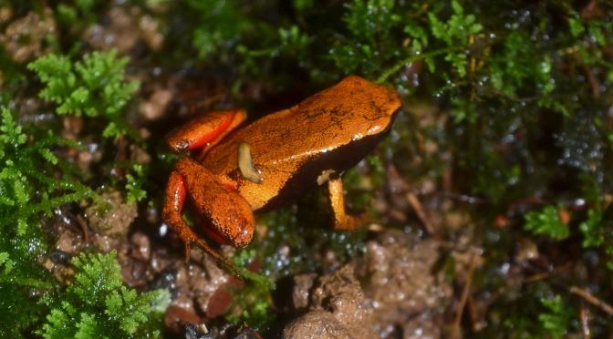 Bakozetra locality, Torotorofotsy Wetlands Reserve. 2015